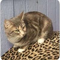 Adopt A Pet :: Nakeyta - Anchorage, AK