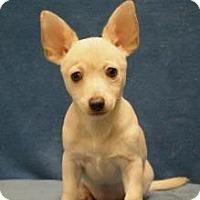 Adopt A Pet :: Blanca - Sacramento, CA