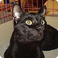 Adopt A Pet :: Zorro - Chesapeake, VA