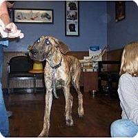 Adopt A Pet :: Jewel - Oak Ridge, TN