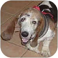Adopt A Pet :: Campbell - Phoenix, AZ