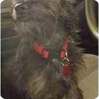 Adopt A Pet :: Aron - Miami, FL