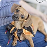 Adopt A Pet :: Charlotte - Kingwood, TX
