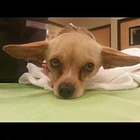 Adopt A Pet :: Callaway - Tucson, AZ