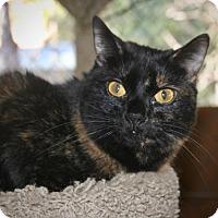 Adopt A Pet :: Sophia - Cottonwood, CA