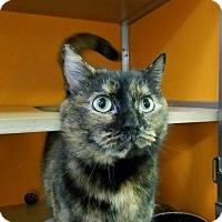Adopt A Pet :: Beautifuls - Elyria, OH