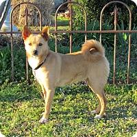 Adopt A Pet :: PARIS - Hartford, CT