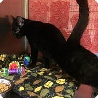 Adopt A Pet :: Azalea - Worcester, MA