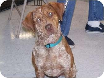 Cattle Dog Mix Dog for adoption in Odessa, Florida - MINNIE