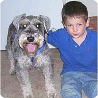 Adopt A Pet :: Sam - Chandler, IN