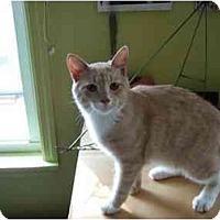 Adopt A Pet :: Malcom - Philadelphia, PA