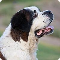 Adopt A Pet :: Chazy - Glendale, AZ