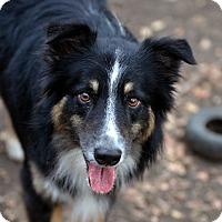 Adopt A Pet :: Huck - Garland, TX