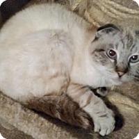 Adopt A Pet :: Ceri - Davis, CA