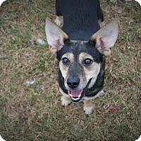 Adopt A Pet :: Walnut - Hagerstown, MD