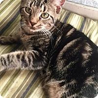 Adopt A Pet :: Melanie - McDonough, GA