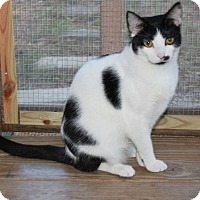 Adopt A Pet :: Mandy - Youngsville, NC