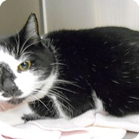 Adopt A Pet :: Noel - Redding, CA