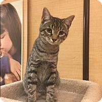 Adopt A Pet :: Princess - Jackson, NJ
