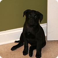 Adopt A Pet :: Tank - Huntsville, AL
