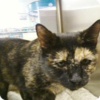 Adopt A Pet :: Charlotte - Tucson, AZ