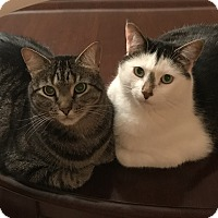 Adopt A Pet :: Rocky and Bandit - Bear, DE