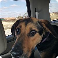 Adopt A Pet :: Prissy - Aurora, IL