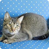 Adopt A Pet :: Kaiya - Davis, CA
