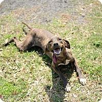 Adopt A Pet :: Tink - Muldrow, OK