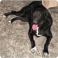 Adopt A Pet :: Brianne - Poland, IN