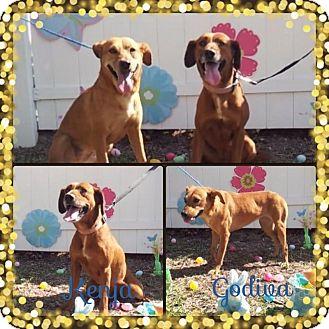 Shepherd (Unknown Type) Mix Dog for adoption in Palmetto Bay, Florida - Kenja