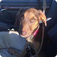 Adopt A Pet :: Rayburn - Vidor, TX