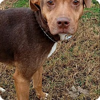 Adopt A Pet :: Abby - MC KENZIE, TN
