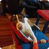 Adopt A Pet :: Rocco - Hawthorne, CA