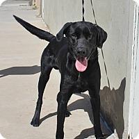Adopt A Pet :: A20 Brent - Odessa, TX