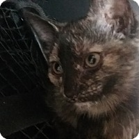 Adopt A Pet :: Holly - wyoming valley, PA