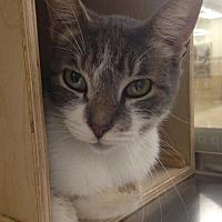 Adopt A Pet :: Toby - Houston, TX