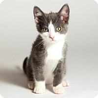 Adopt A Pet :: Parker - Kingston, ON