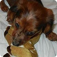 Adopt A Pet :: Dakota - Antioch, IL