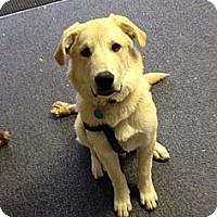 Adopt A Pet :: Bradley - Phoenixville, PA