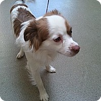 Adopt A Pet :: Arnold Ziffel - Fort Hunter, NY