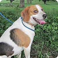 Adopt A Pet :: Willow a.k.a. Willie B. - Wilmington, DE