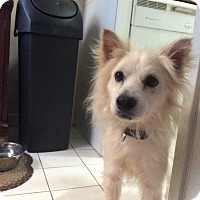 Adopt A Pet :: Outstanding Olaf - Madison, NJ