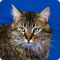 Adopt A Pet :: Orbit - Calgary, AB