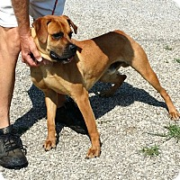 Adopt A Pet :: Arlo - RESCUED! - Zanesville, OH