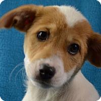 Adopt A Pet :: Posey - Minneapolis, MN