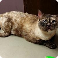 Adopt A Pet :: Scarlett - Edmond, OK