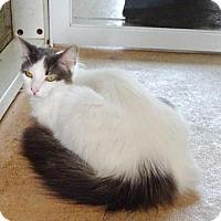 Adopt A Pet :: Dina - Belleville, MI