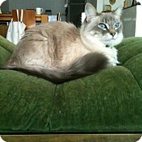 Adopt A Pet :: Stretchy - Brooklyn, NY