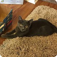 Adopt A Pet :: Andre - Marietta, GA